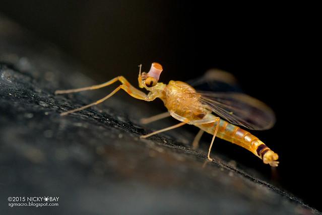 Mayfly (Ephemeroptera) - DSC_4652