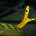 Snake Day 2016 by guenterleitenbauer