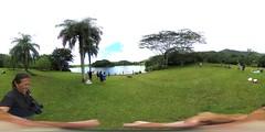 Two Piglets running around by the lake at Ho'omaluhia Botanical Garden in Kaneohe,  O'ahu. Hawai'i -a 360° Equirectangular VR