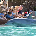 Dolphin at Seaworld in San Diego