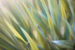 Gras drüber