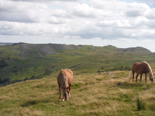 Hill Ponies and Cribarth Hills