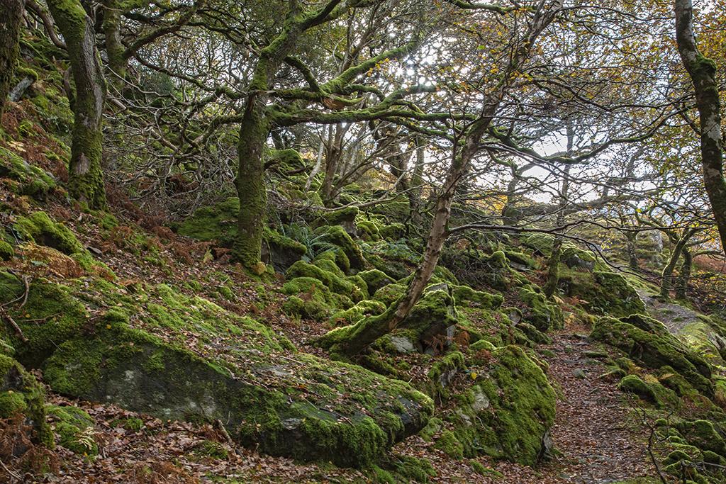 Snowdonia walk