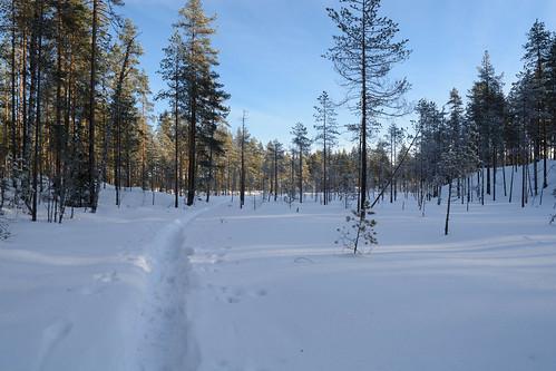 winter snow nature finland nationalpark nikon fi kansallispuisto walkingpath ruovesi helvetinjärvi pirkanmaa d7100