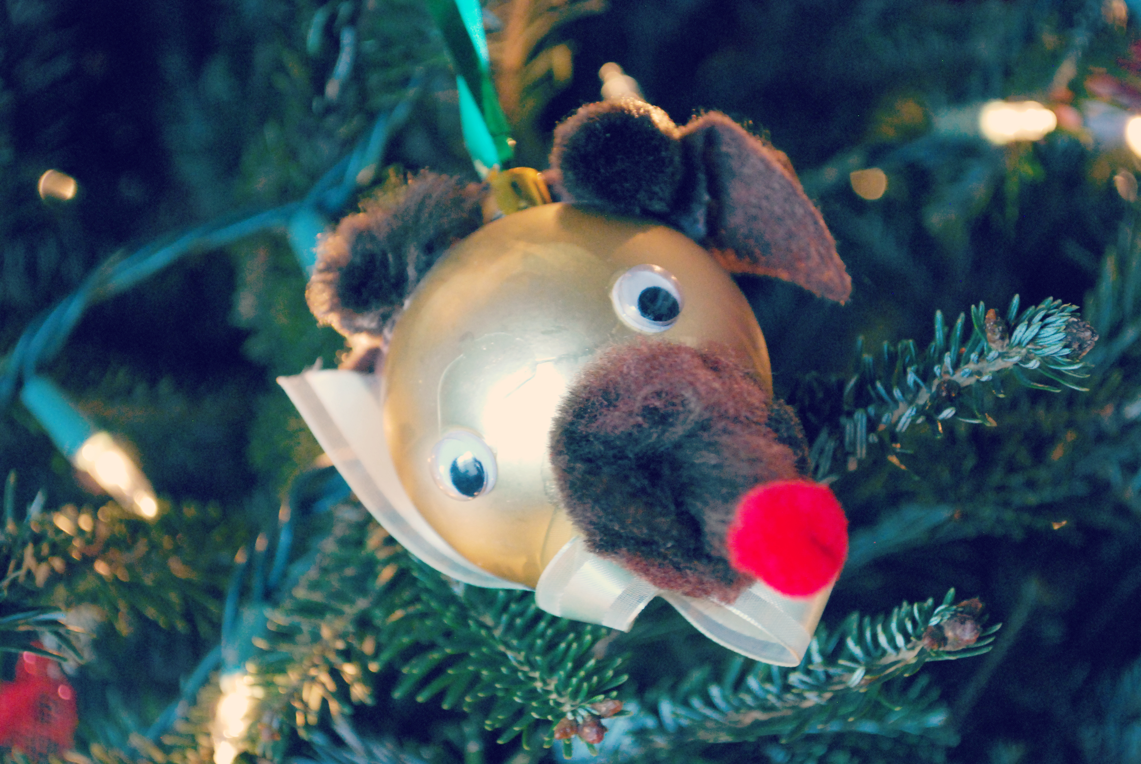 boys reindeer