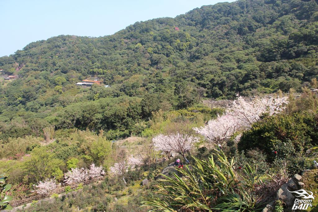 2015楓樹湖木蓮花21