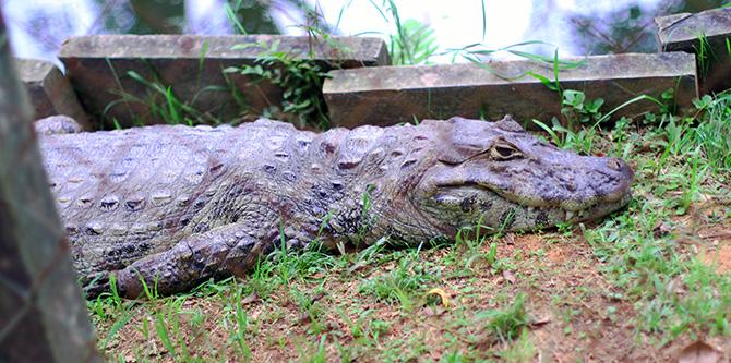 08-look do dia no zoologica santur balneario camboriu