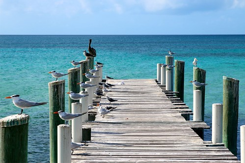 blue sky color water beautiful birds piers bahamas caribbeansea
