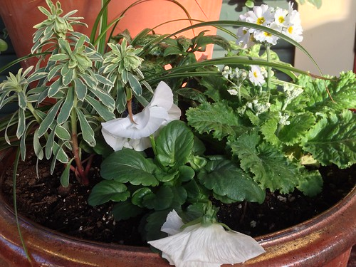Front Porch Winter Container Plants