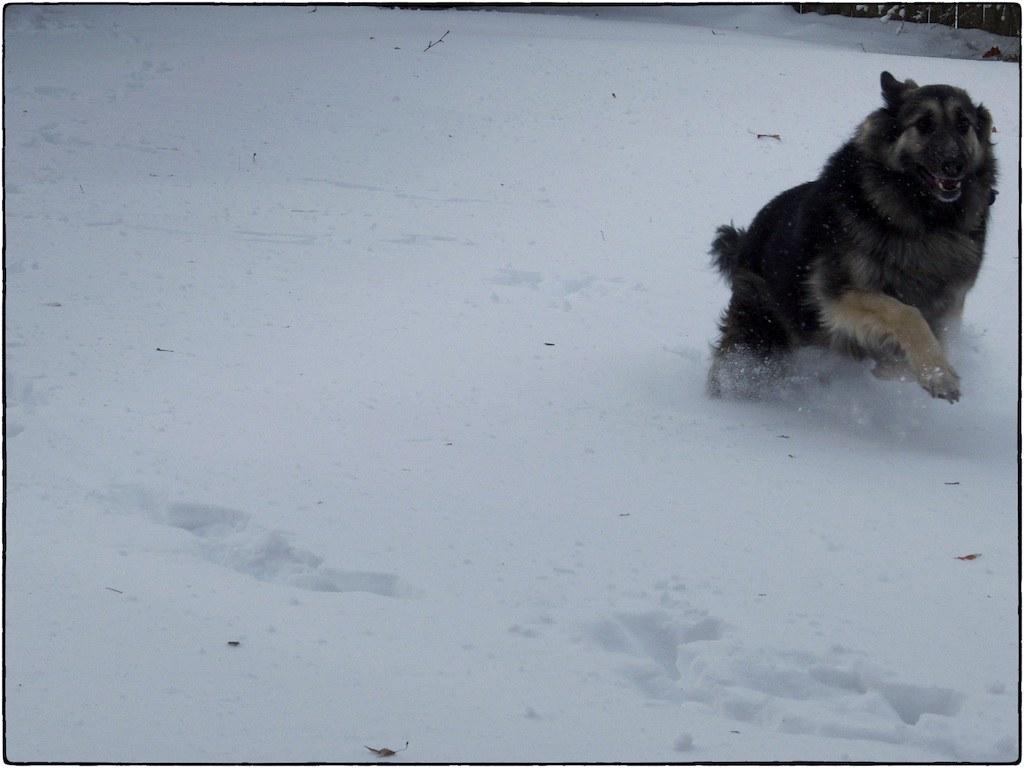 Tasha Is A Snow Dog, February 01, 2015