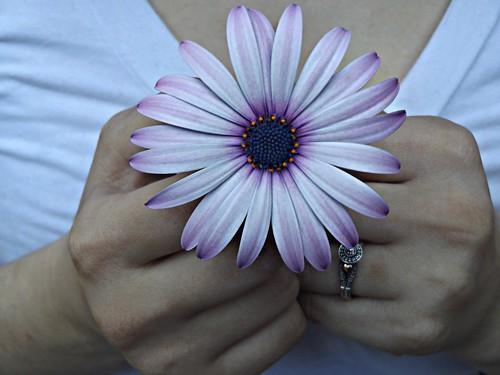 Emra Silva - Flowers