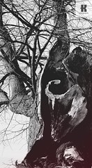 Tree angles IV