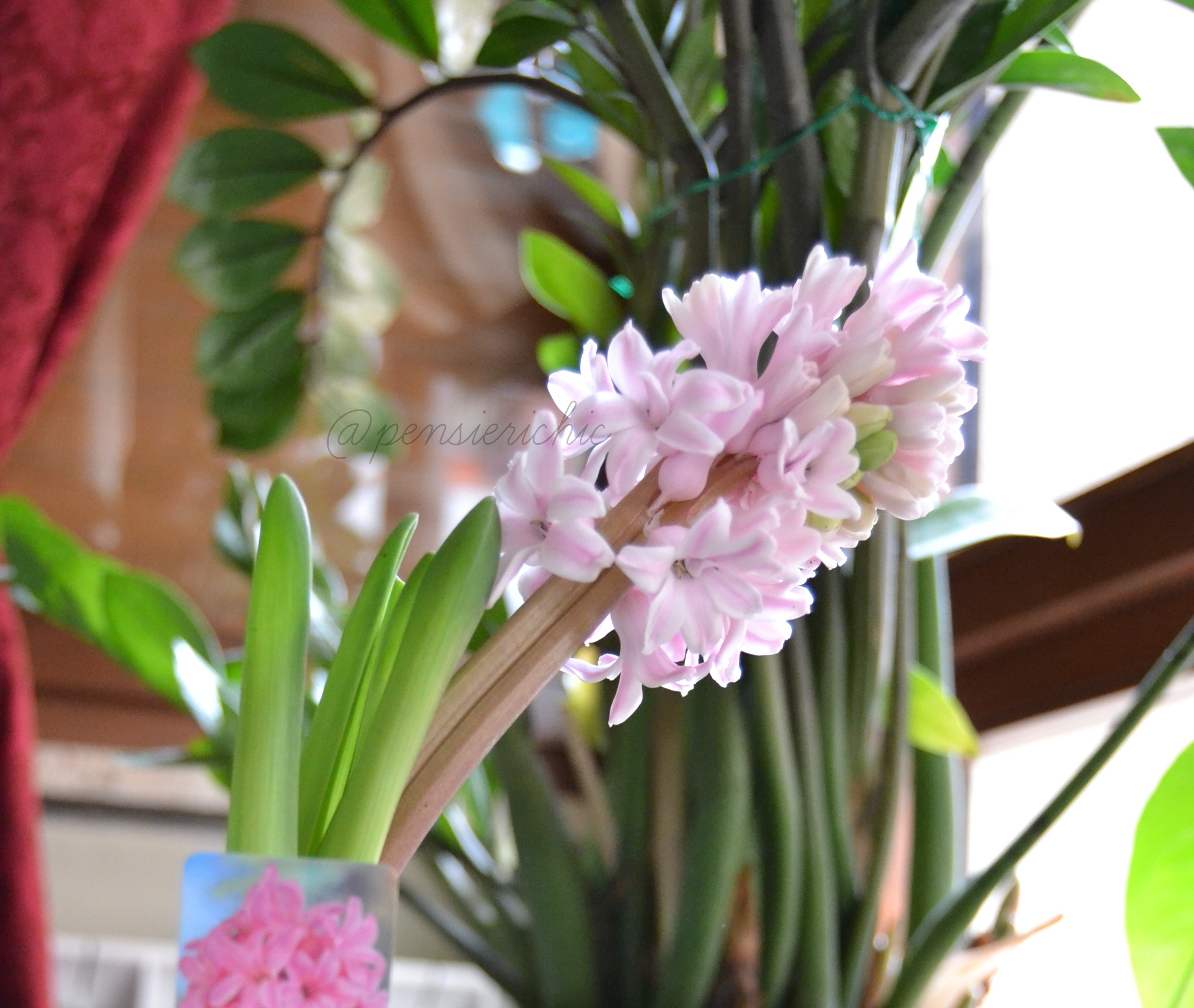 bulbo fiorito