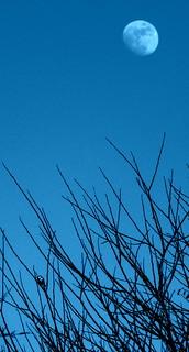 Blue Moon..Blue Bird..