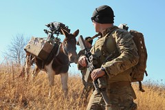 Donkey WithSoldier