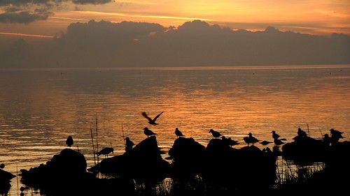sunset sea water birds