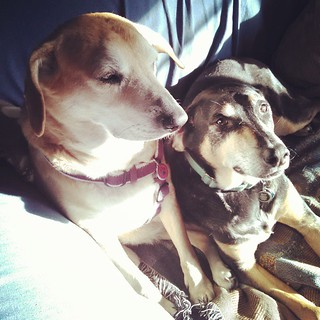 Happy Saturday Morning. The #hounds have claimed the #sunspot #dogstagram #instadog #rescued #houndmix
