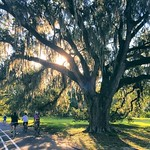 Looking for a study break? Try beautiful Audubon Park, located just steps away from campus. You won't regret it.   #OnlyAtTulane #OnlyInNewOrleans   @juicy_lonas