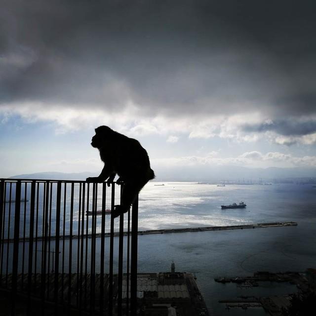 Gibilterra - Upper rock