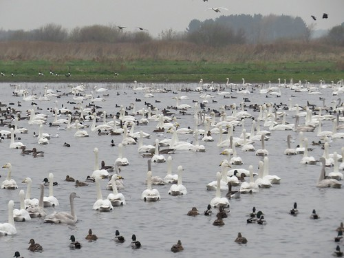 499 Birds on The Mere