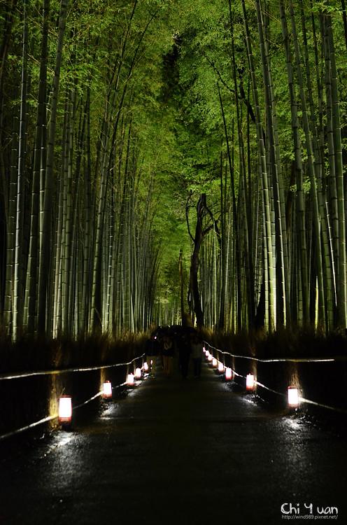 嵐山花燈路-竹林之道14.jpg