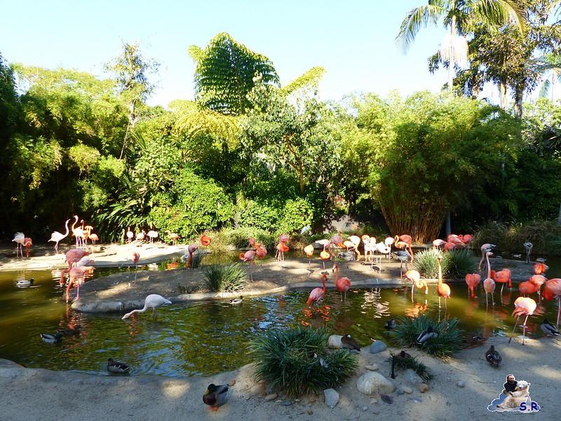 San Diego Zoo 10.11.2014 161