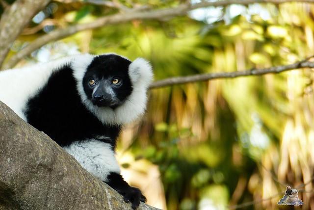 Zoo Miami 14.11.2014 184