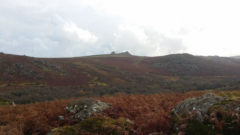 Looking across to Haytor #dartmoor #sh