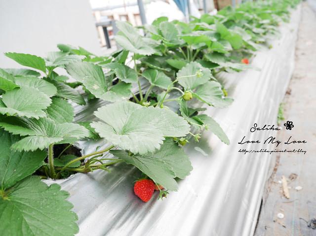 內湖採草莓圃咖啡下午茶 (20)
