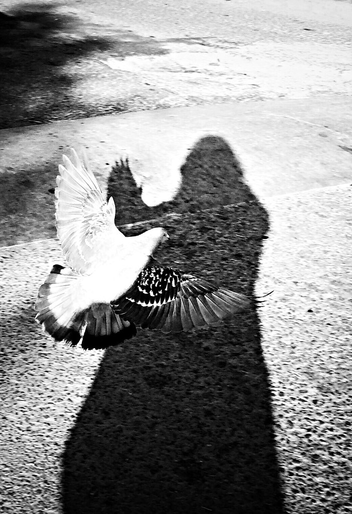 Las palomas ... EyeEm Best Shots EyeEm Best Shots - Black + White NEM Mood NEM Silence NEM Avantgarde NEM Painterly NEM Boundlesslove NEM Black&white NEM Self