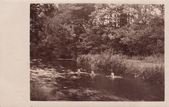 A dip in the river (1910s)