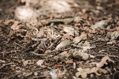 Quiet Forest Floor