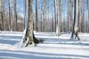 Las tres hayas en invierno