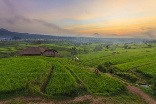 travel bali sunrise landscape tour guide jatiluwih balitour baliphotography baliphotographytour baliphotographyguide