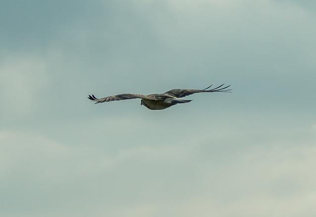 Christian ±π - big bird  :-)