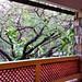 Hotel Valles - Ciudad Valles SLP México 140225 082911 S4 por Lucy Nieto