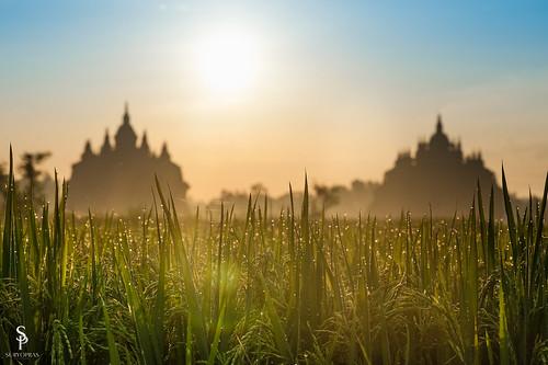 morning heritage sunrise temple view rice dew padi klaten