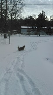 Maxi playing in the snow