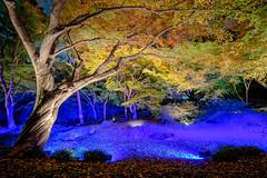 Tokyo Yellow Autumn