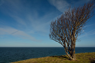 Being exposed to predominant wind directions for years takes its toll on your harido, Hundested, Denmark