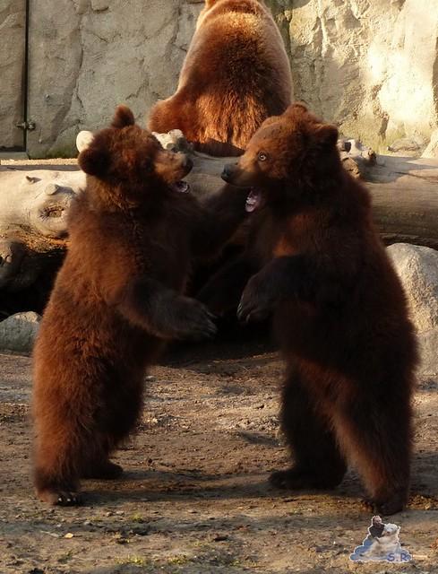 Tierpark Hagenbeck 27.02.2015  142