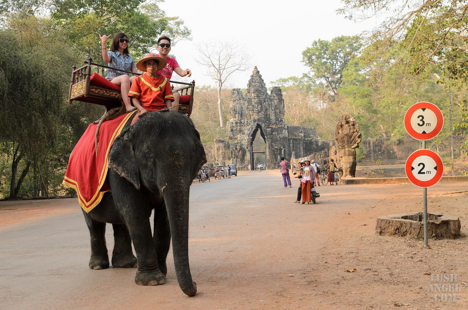 cambodia-siem-reap-elephant-ride