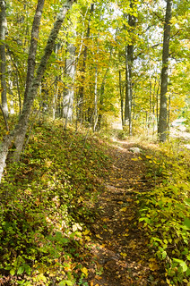 Got to love the autumn trails