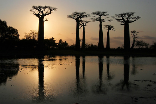 africa travel sunset adventure reflet madagascar coucherdesoleil afrique morondava baobabs océanindien indianocéan