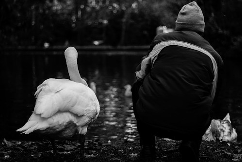 BW Swan NEW 2