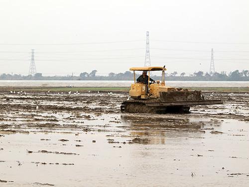 翻滾機開過田裡,把剩下的毛豆莖、根攪爛打入土裡。攝影:朱雲瑋