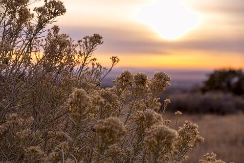sunset plants newmexico nature desert albuquerque sage nm grantcondit