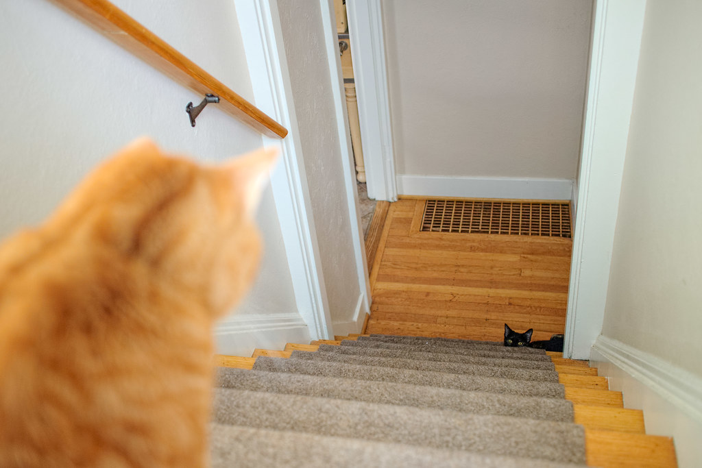 Our kitten Trixie looks up the stairs at our oldest cat Sam