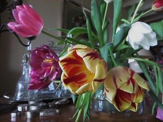 Le bouquet de tulipes, Bosdarros, Béarn, Pyrénées Atlantiques, Aquitaine, France.