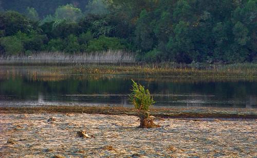 trees sunset landscape poland polska backwater drzewa krajobraz zmierzch światłocień rozlewisko chairscuro